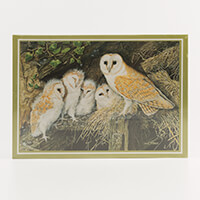 Barn Owl and Family 1000 piece-500462